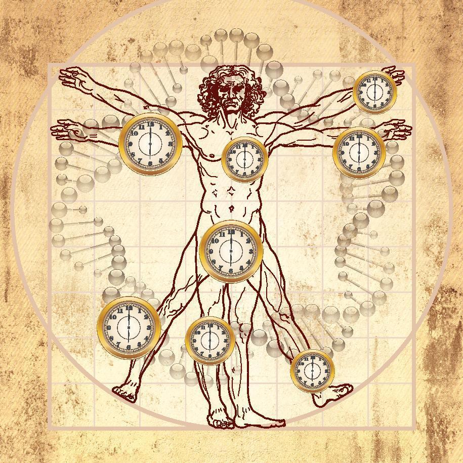 the-art-of-knowing-aging-eternal-law-vitruvian-man