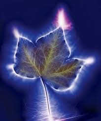 plant-aura