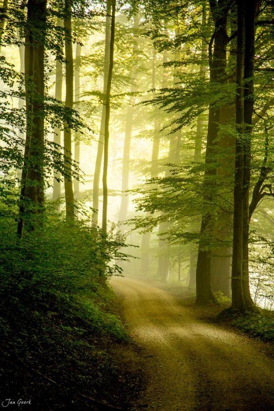 f236de49c7538b8f40a67b487084c9ce--forest-road-the-forest